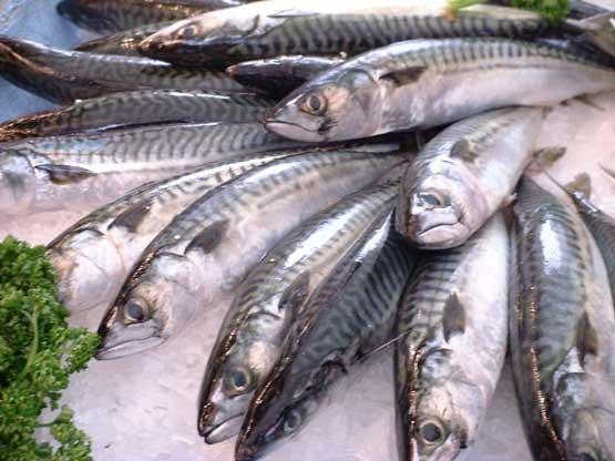 makreel visolie